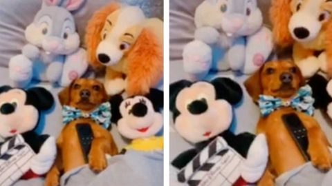 THIS CUTE SAUSAGE DOG LOVES TO RELAX WITH HIS FAVOURITE DISNEY PALS Image