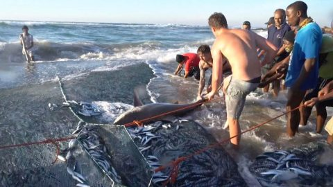 HEROIC MEN SAVE TWO-METRE-LONG SHARK TRAPPED INSIDE FISHING NET Image