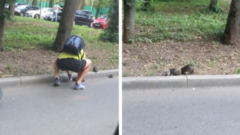 HEARTWARMING MOMENT CARING CYCLIST HELPS STUCK HEDGEHOG FAMILY ONTO PAVEMENT Image