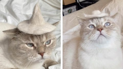 CAT IN THE HAT: WOMAN MAKES WEEKLY HAT COLLECTION FOR CAT OUT OF FELINE'S OWN FUR Image