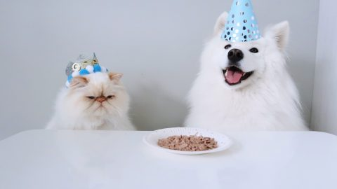 HILARIOUS PICTURES SHOW THE HEART WARMING RELATIONSHIP BETWEEN A GRUMPY CAT AND A FLUFFY DOG Image