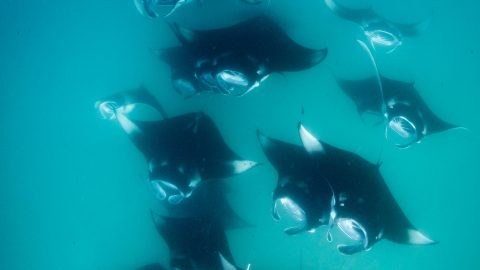 DIVER GETS STUCK IN A MANTA RAY HIGHWAY IN THIS INCREDIBLE FOOTAGE Image