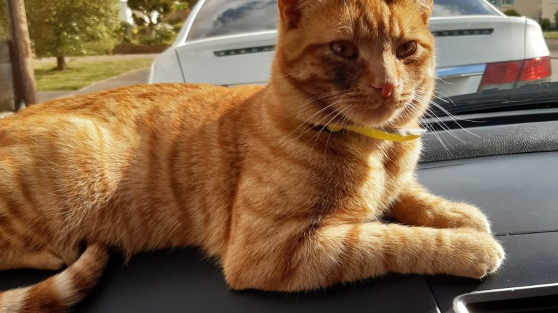 MISSING CAT FOUND 24 MILES AWAY AFTER WANDERING BACK TO HIS BIRTHPLACE Image