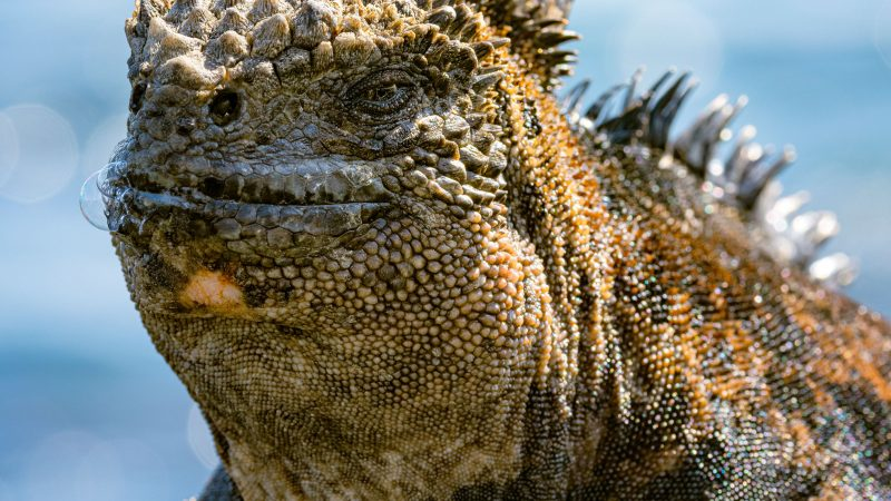 UP CLOSE AND PERSONAL WITH  COLOURFUL GODZILLA-ESQUE LIZARDS Image