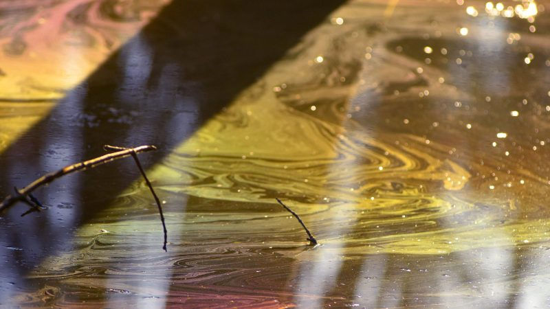 HIDDEN BEAUTY OF RARE RAINBOW SWAMP CAUGHT ON CAMERA Image