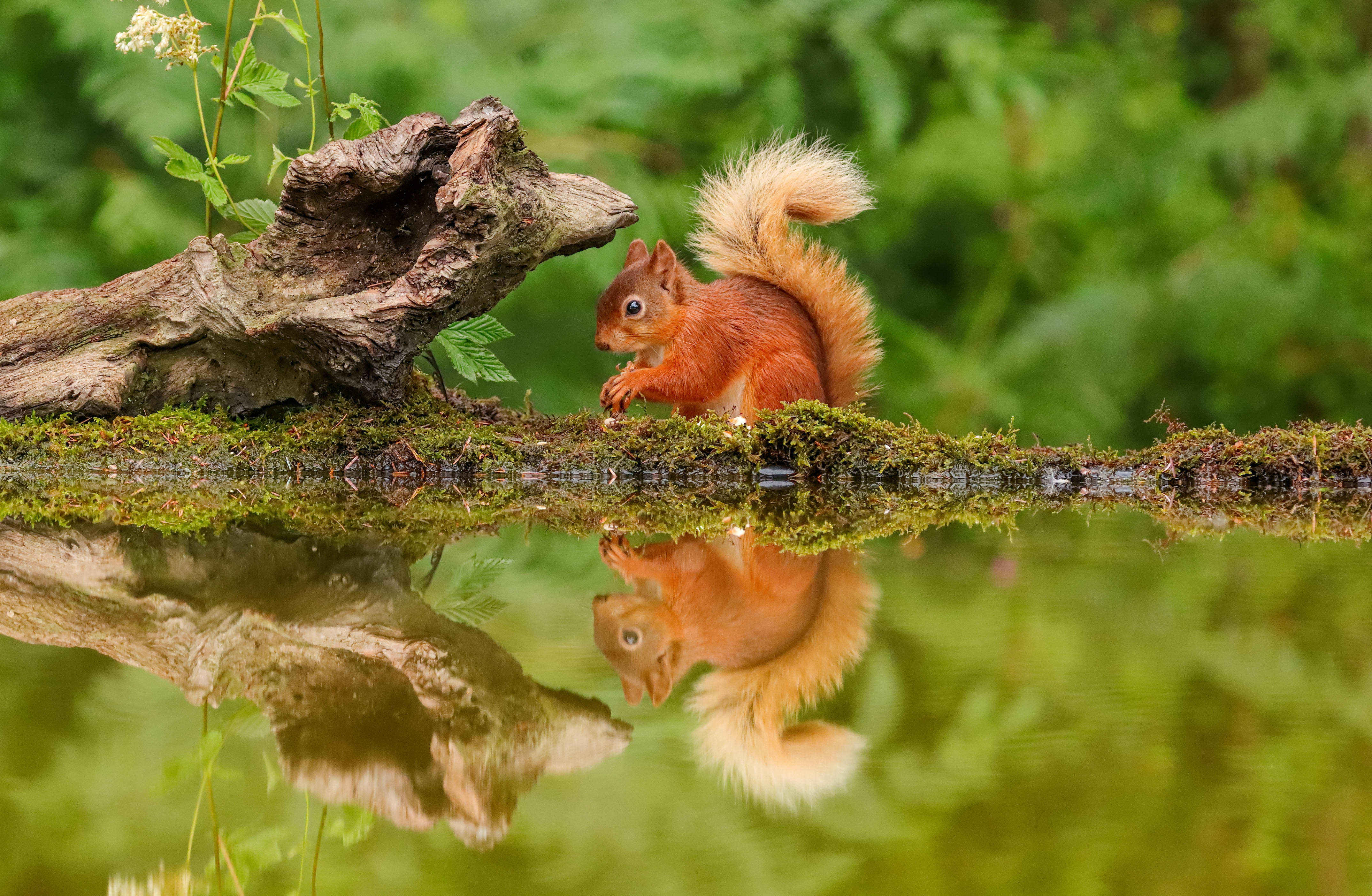 STUNNING IMAGES SHOW BRITISH WILDLIFE CAUGHT IN REFLECTIONS Image