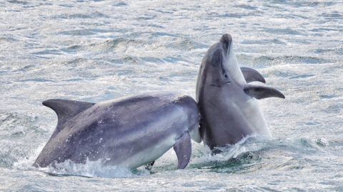 DOLPHIN TACKLES PALS BACK ITCH WITH ITS SNOUT IN SCOTTISH HARBOUR Image