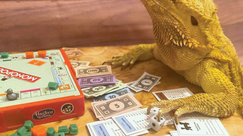 POSING LIZARD SUNBATHES, PAINTS, ENJOYS DATES, PARTIES AND EVEN PLAY MONOPOLY IN HILARIOUS PHOTOS Image