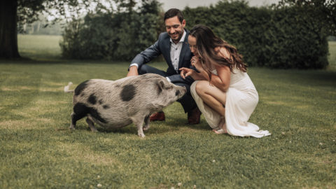 BRIDE DECIDES TO HAVE A PIG AS HER BRIDESMAID Image