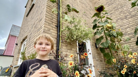 SIX-YEAR-OLDS 14FT SUNFLOWER IS TURNING HEADS Image