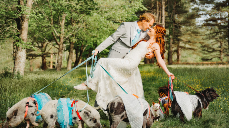 ANIMAL LOVERS HAVE THEIR FARM ANIMALS AS THEIR WEDDING PARTY - INCLUDING GROOMSPIGS, COWS OF HONOURS, FLOWER CHICKENS AND BRIDESDOGS Image