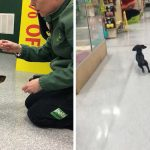 Adorable dachshund works at local pet store shop as 'chief meeter and greeter'