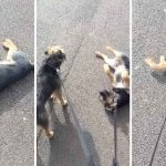 Ruff walkies for this pup; Dog doesn't want walk to end
