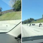 Little Black Dog Causes Havoc On Freeway By Giving Concerned Drivers The Runaround
