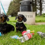 Not So Silly Sausage - Litter Picking Mini Dachshunds Become Eco Warriors By Helping Owners Collect Plastic Waste